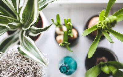 Trendy tuin- en kamerplanten