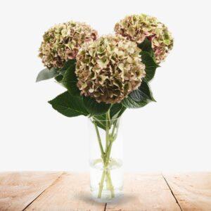 Hortensia herfstbos