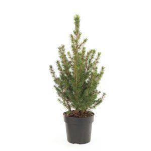 Mini kerstboompje - P 9 cm