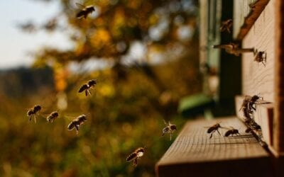 Nederlandse Bijenhoudersvereniging (NBV) lanceert bijenjournaal